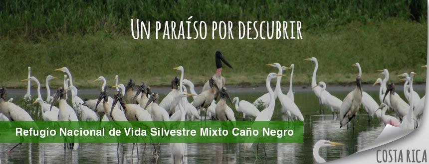 foto1_cano_negro